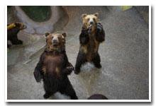 熊牧場のご案内